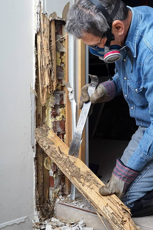 Termite damage on a door