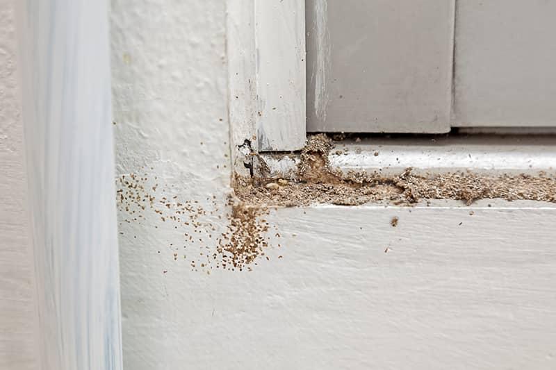 Termite damage under a window
